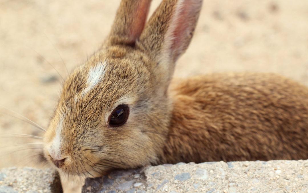 Okunoshima: Un paseo por la isla de los conejos